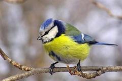 Відзначення Всесвітнього дня мігруючих птахів